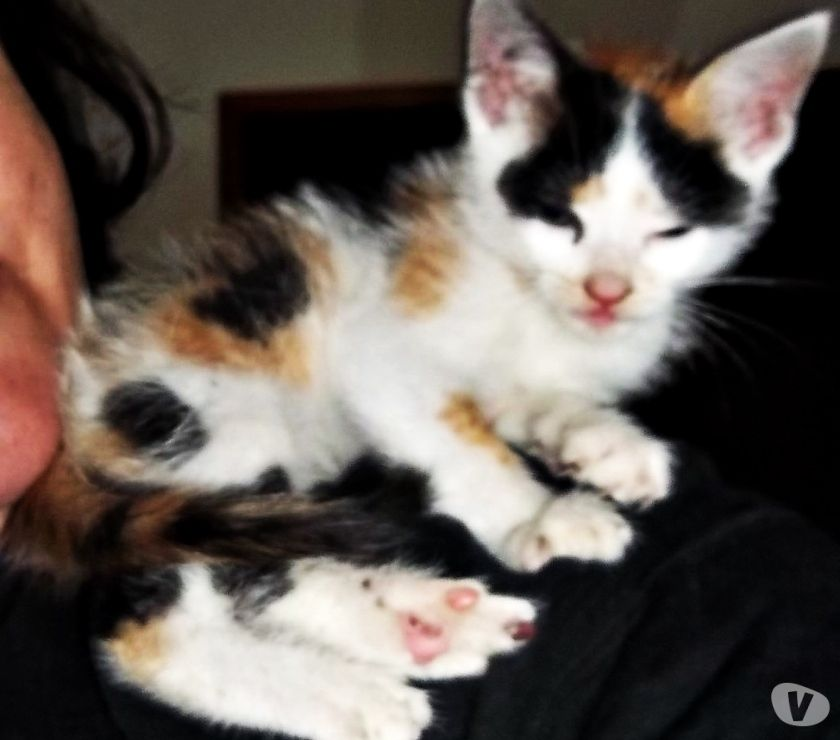 Fotos de Gatitos y perritos en ADOPCIÓN RESPONSABLE C.A.B.A Y Gran BS