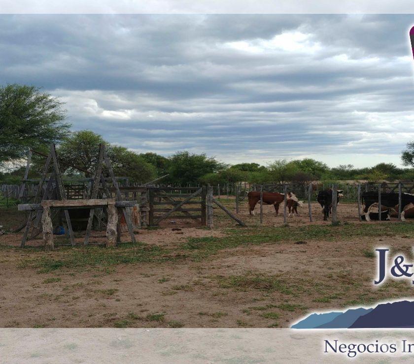 Campos en Venta Villa General Roca - Fotos de Vendo espectacular campo mixto