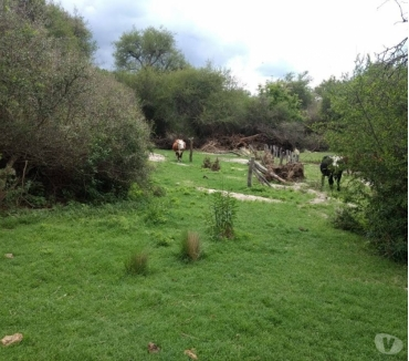 Fotos de GPS VENDE. 2500 Has.GANADERAS. Las Lomitas