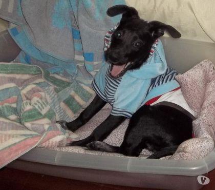 Fotos de Gatitos y perritos en adopción responsable
