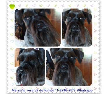 Fotos de Servicio de peluquería canina a domicilio. en CABA