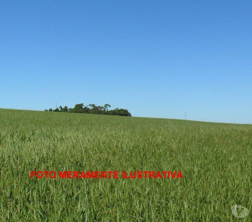 Fazendas - Sitios à venda Sete de Setembro RS - Fotos para Area terra agricultura e pecuaria, 160ha prox Sete Setembro