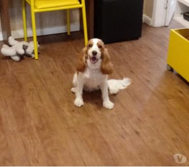 Fotos para Adestrador de cães no Rio de Janeiro RJ