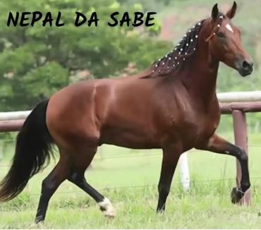 Fotos para Sítio em Tangua com cavalos !