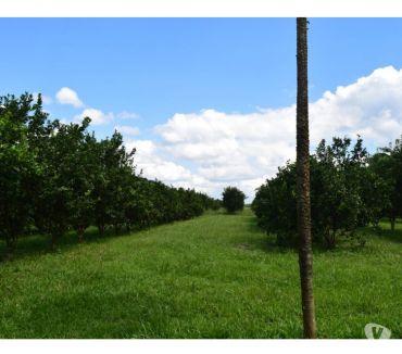 Fotos para Sítio BR 174 km 15 (na pista) com nascente - Documentado