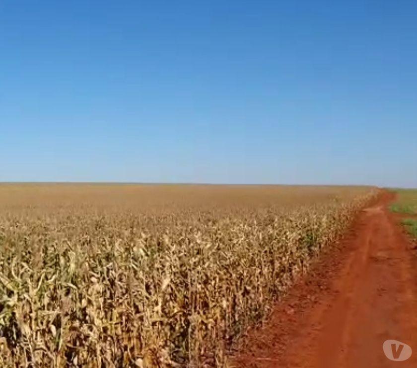 Fazendas - Sitios à venda Porecatu PR - Fotos para EXCELENTE FAZENDA COM 125 ALQUEIRES NA REGIÃO DE PORECATU PR