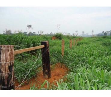 Fotos para Fazenda a venda em Cumaru do Norte Pará área 62000 hectares