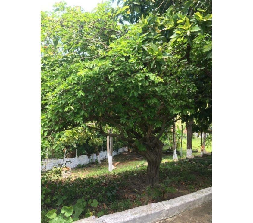 Fotos para Chácara Quinta do Araças 5900m² PRAIA NOVA CRUZ IGARASSU PE