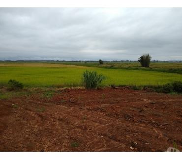 Fotos para Área de terras para arroz, 55 hectares, Passo de Torres, SC