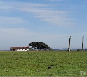Fotos para Fazenda 583 ha ARRENDADA SojaPecuária Capão da Porteira RS