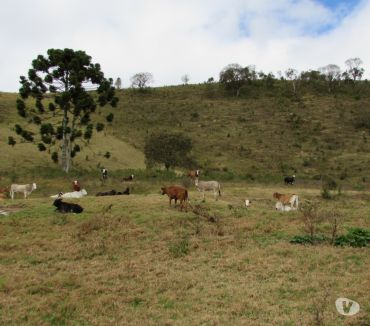 Fotos para Fazenda na regiao de Extrema MG a 35 km