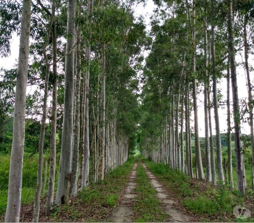 Fazendas - Sitios à venda Araruama RJ - Fotos para Fazenda Com Loteamento Aprovado Em Araruama