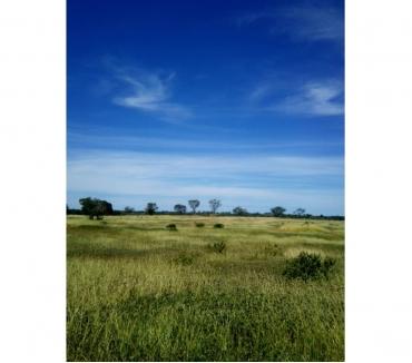Fotos para Ref:Arrend.01 - Arrenda-se fazenda 600 hec Gameleiras-MG.