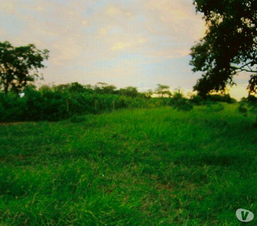 Fotos para EXCELENTE FAZENDA COM 83 ALQUEIRES EM BATAGUASSU MS