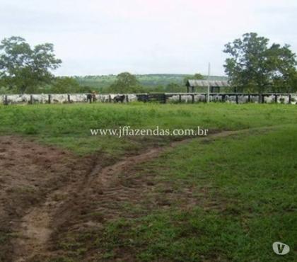 Fotos para Fazenda em São Gabriel do Oeste - 373 hectares