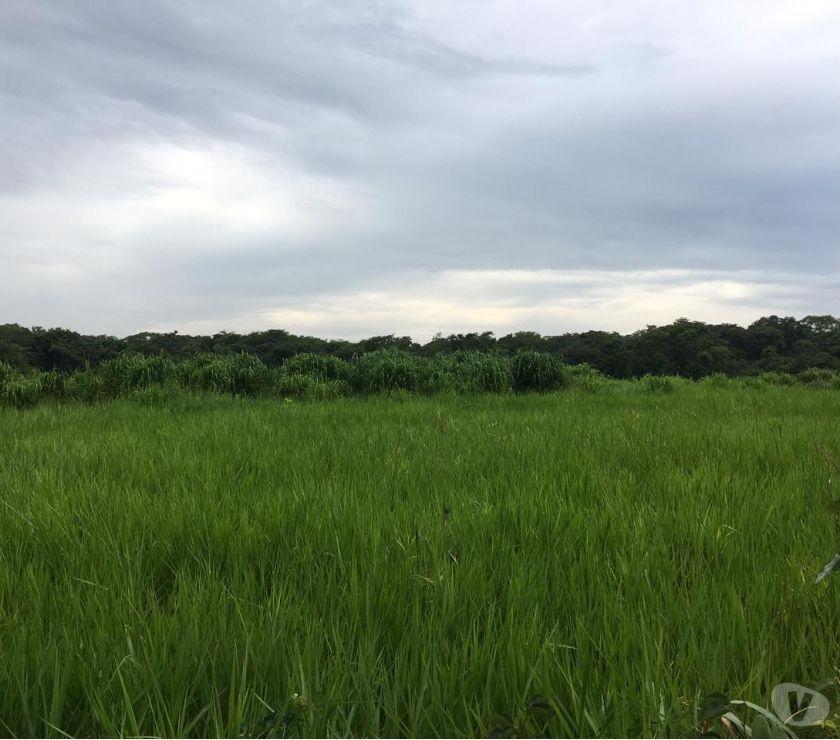 Fazendas - Sitios à venda Paranatinga MT - Fotos para OPORTUNIDADE DE FAZENDA COM 1.050 HECTARES EM PARANATINGA MT