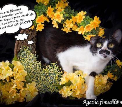Fotos para SP - Gatinha Agatha - para adoção responsável