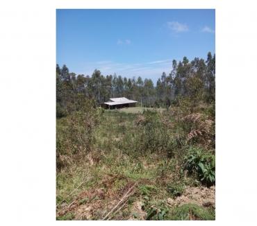 Fotos para Fazenda à venda em Leoberto Leal Santa Catarina