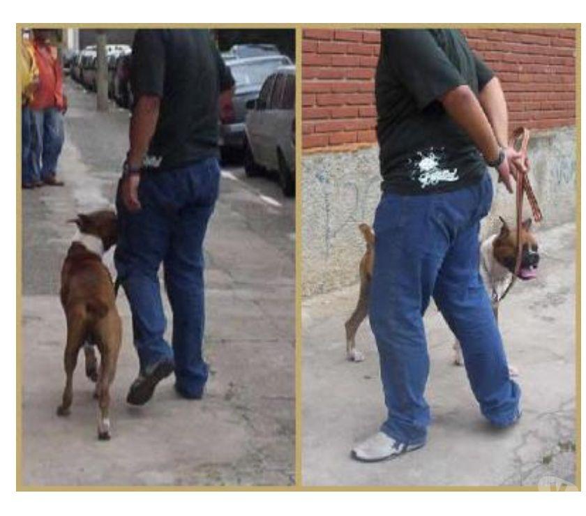 Fotos para Adestrador de cães a domcilio Tatuapé