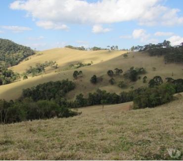 Fotos para Fazenda na divisa sao paulo - sul de minas