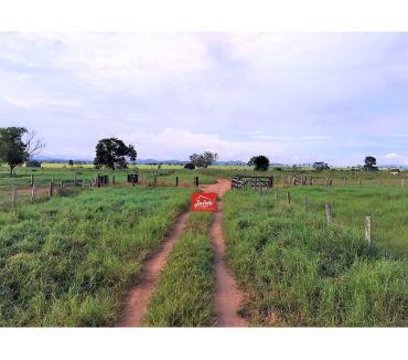 Fotos para Fazenda em Cumaru PA dupla aptidão área 22000 hectares