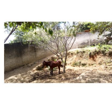 Fotos para Terreno em Florianópolis no bairro Pantanal