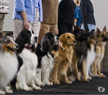 Fotos para Adestramento de cães e gatos. dog Walker Passeio Cães