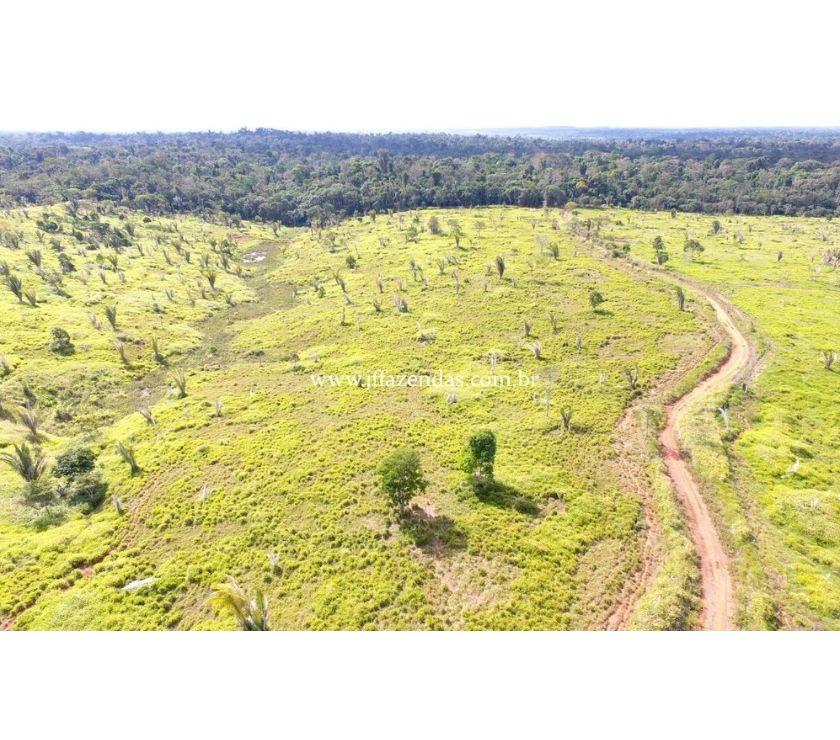 Fazendas - Sitios à venda Jaru RO - Fotos para Fazenda em Jaru - 2662 hectares