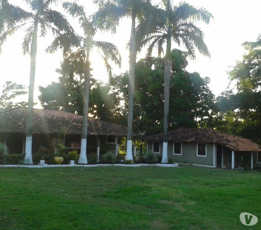 Fotos para Sítio na BR em Santa Inês com dez (8 hectares)