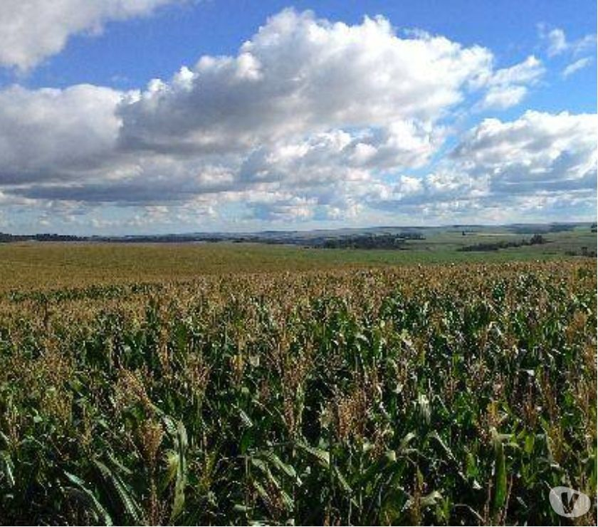 Fazendas - Sitios à venda Mambore PR - Fotos para EXCELENTE FAZENDA DE SOJA COM 63 ALQUEIRES EM MAMBORE PARANÁ