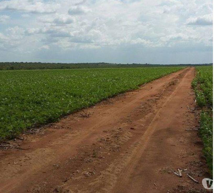 Fotos para FAZENDA COM 1.610 HECTARES EM SANTA ROSA DO TOCANTINS TO
