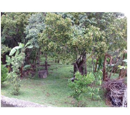 Fotos para Terreno em Florianópolis no bairro Pantanal, medindo 672m²