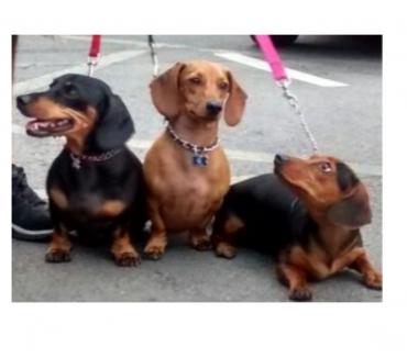 Fotos para Dog walker - Passeador De Cães - Tatuapé