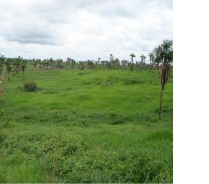 Fotos para OPORTUNIDADE DE FAZENDA COM 7.502 HECTARES EM ARAGUAINA TO
