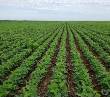 Fotos para Fazenda com 33.000 hectares Mato Grosso - Brasil