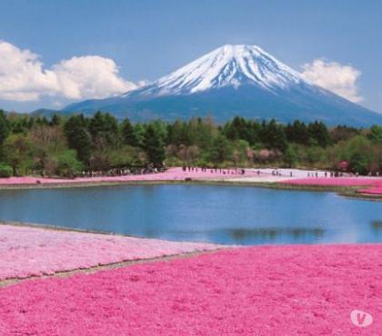 Fotos para Aula de Idioma Japones