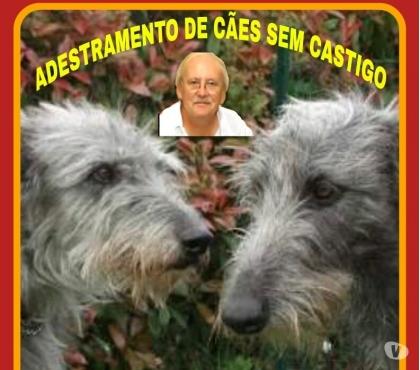 Fotos para ADESTRAMENTO DE CÃES SEM CASTIGO
