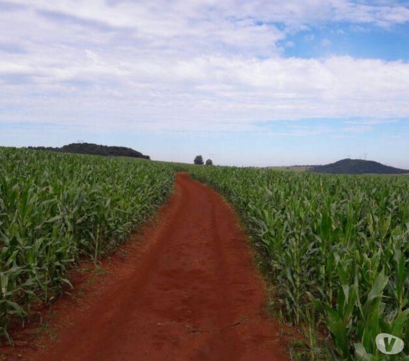 Fazendas - Sitios à venda Mambore PR - Fotos para LINDA FAZENDA COM 63 ALQUEIRES NA REGIÃO DE MAMBORE PARANÁ