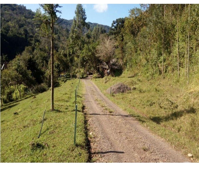 Fazendas - Sitios à venda Canela RS - Fotos para SÍTIO ST376