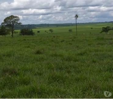 Fotos para EXCELENTE FAZENDA COM 570 ALQUEIRES REGIÃO DE PARANAVAÍ PR
