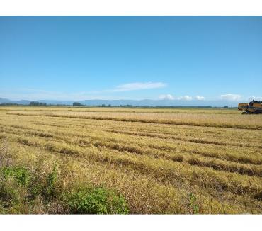Fotos para Área de terras de 55 hectares em Passo de Torres, SC
