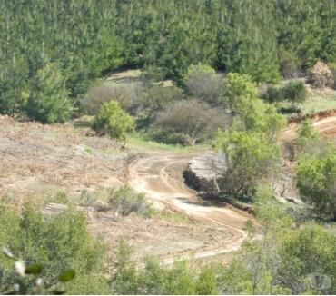 Fotos de Muy buen campo de 811 hectáreas en San Javier-Linares