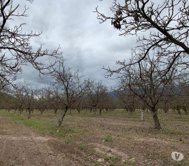 Fotos de Parcelas en Paine apto Frutales-Viñas, 9 hectareas cada una