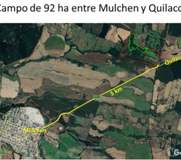 Fotos de Espectacular Campo de 92 has Forestal en Mulchén-Biobío