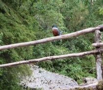 Fotos de CAMPO FOREST 917 HAS VALLE De CONCHA,COCHAMO, X REGION