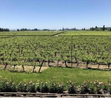 Fotos de Precioso Campo de 70 hectareas con Viñas y Bodegas-Molina