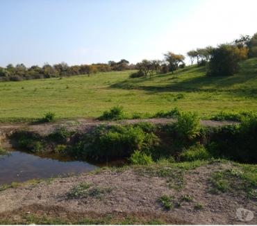 Fotos de Precio Campo de 80 hectareas con agua Melipilla de uso mixto