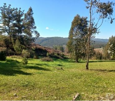 Fotos de Campo En La Trinchera Comuna De Curepto, Talca.V870