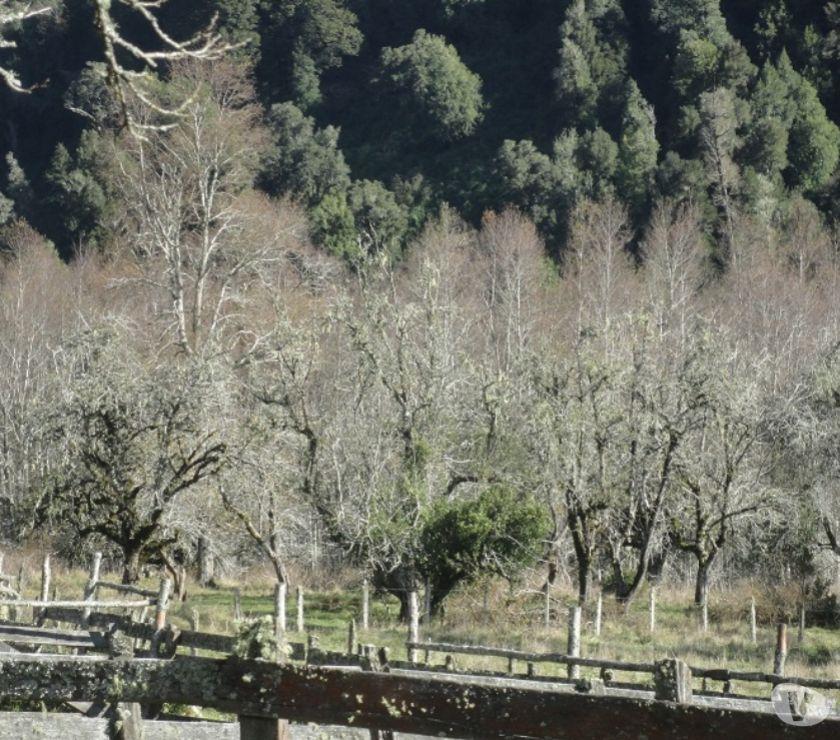 Fotos de Extraordinario predio de 800 has en Futrono (Valdivia)