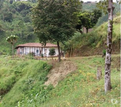 Fotos de Venta Finca Agropecuaria